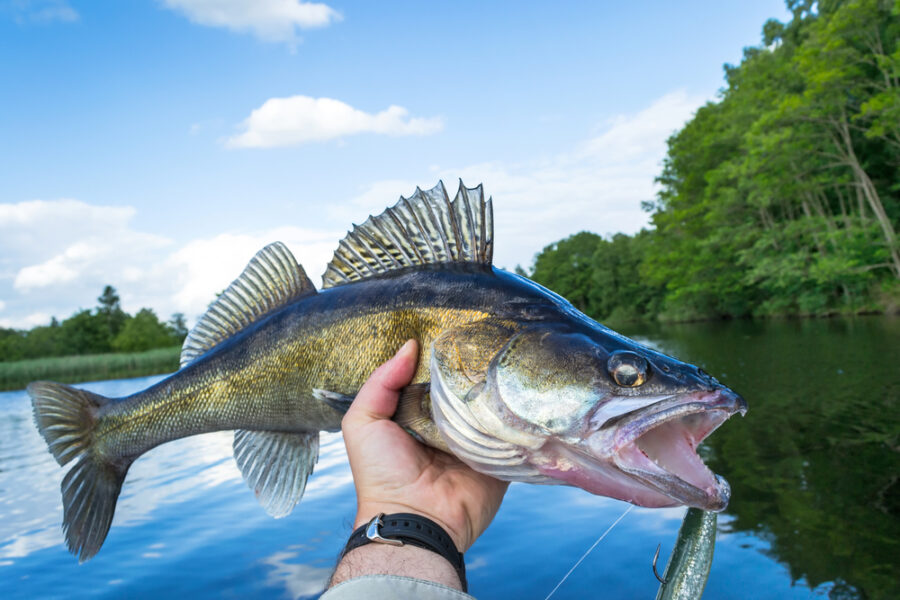 Photo of an Angler Holding up a Bass at One of the Best Whiteshell Fishing Spots.