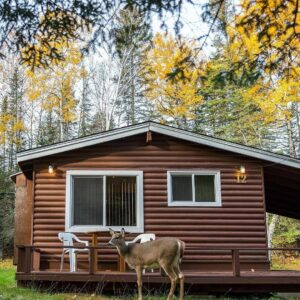 Photo of a Deer Standing Next to a Tallpine Cabin. It's Fall Photography at Its Finest.